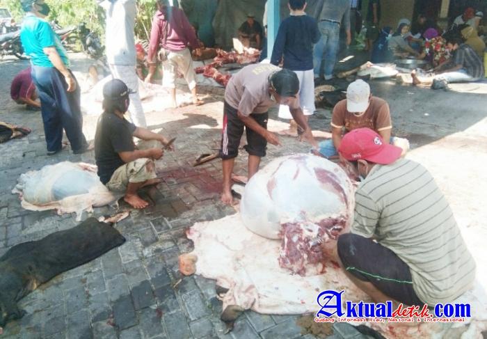 Masjid Al-Ikhlas Kawung RW XIV Tlogosari Semarang Kurban 10 Ekor Sapi, Satu Kambing