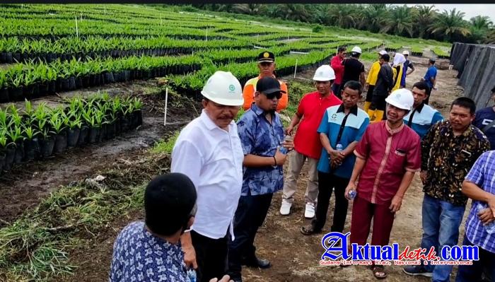 Penangkaran Bibit Sawit Terintegrasi, Dorong Program PSR di Riau
