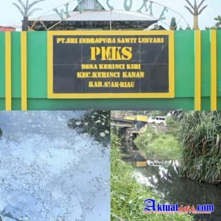 Sungai Kiyap Jaya Tercemar, Diduga Dari Limbah PT.SISL