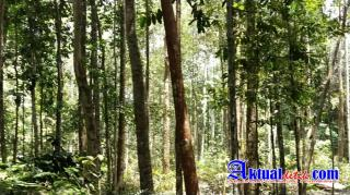 Dinas LHK Riau Akan Wujudkan Tahura Tujuan Wisata
