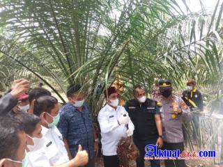 Wakil Bupati Pelalawan Laksanakan Panen Perdana Kebun Kemitraan Kas Desa Kiap Jaya